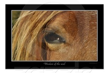 Horses! / Posters, canvasses and prints, both mine, and others that I think look really great + other horsy things!