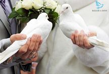 Wedding Releases by Release a Dove