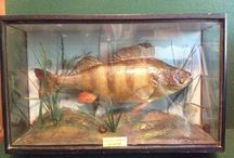 Taxidermy / A selection of items that are for sale in our ebay shop. http://stores.ebay.co.uk/antiquesandcollectables4u
