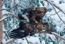 Birds / by Rod Fields