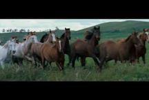 Horses / by Sandra Ransom