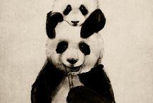 Panda / Black and White... Only Pandas