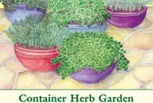 Herbs from Seed / by Herb Society of America