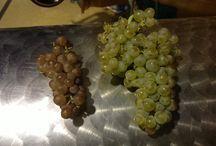 Chardonnay / Bon raisins pour bon vins