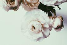 Herbarium / Love for flowers
