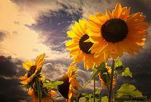 Flowers-Photo / by Dorota Wrona
