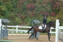 equus <3 / by Abby Starbird