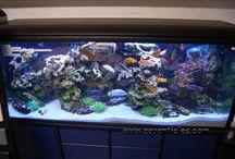 aquarium africa