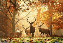 Love Nature / by Leigh Anne Zakariassen