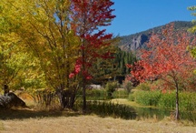 Fall Colors of Plumas County / Plumas County and Lassen Volcanic National Park offer great Fall colors.
