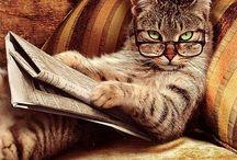 reading ...........