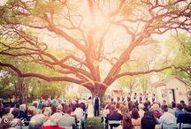 Weddings! / by Amanda Bergstrom