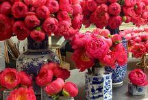 Flowers  / Fine blomster ❤️