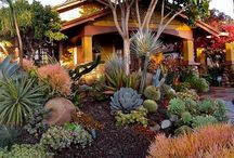 Landscape Design featuring Low Water Plants / With California facing water restrictions, it's time we learn about low water plants and designs.  You can still have a beautiful landscape!  Plant smarter.