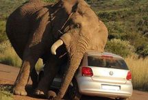 SCARY: Elephant Needed To Scratch. See What It Did When A Car Came By (Photos)