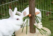 My rabbits / Home & play