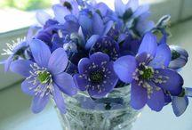 bunga / bunga