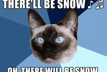 Chronic Illness Cat / Your fave cross-eyed Siamese kitty comments on chronic illness.