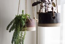 plantes suspendues