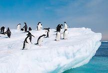 Destination: Antarctica / Hurtigruten articles about traveling to Antarctica
