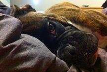 Iago..my love / My dog