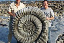 Steiner og fossiler