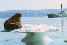 walrus rulezz!