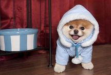 cool or cute?