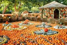 Halloween Pumpkin sites ideas
