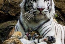 mamas and their babies