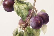 Картинки фрукты