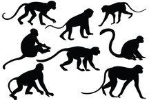 Operation Monkeys