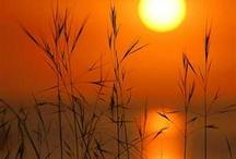 Romantic sunsets / by Sandee Dusbiber