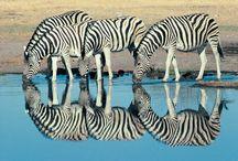 Reflections of..... / by Brenda Huntsinger