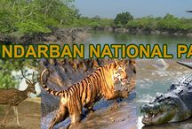 Sundarban Tour / Where the land meets the sea at the southern tip of West Bengal lies the Indian Sundarbans, a stretch of impenetrable mangrove forest of great size and bio-diversity