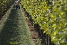 Wina Włochy