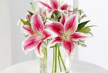 Mother's Day Flowers! / Great flowers for Mom on her special day