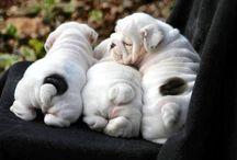 cachoritos