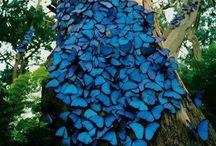 Sininen/blå/blue