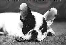 Hundesprüche