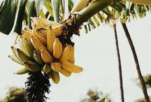 Fruitssss