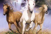 CAVALOS / Cavalos em fotos, pinturas e desenhos