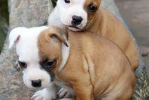 perritos / los perros son hermosos