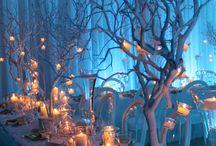 festa winter