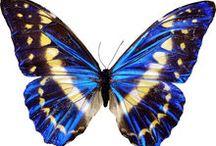 mariposas technicolor
