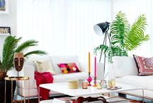 Tropical & Indoor Plants❗️❤️