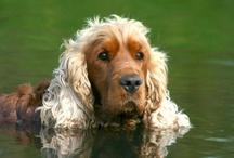 Animals ~ Dogs Domestic / by Coralie Jones