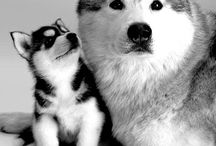 Dogs / Hondjes