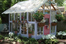 greenhouse / by Claire Herman
