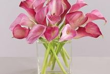 Calla Lillies / by Renee J